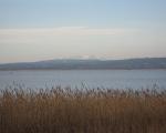 Au bord de l\'étang de Sérignan en février