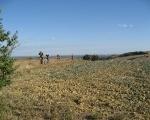 file de bikers en bordure de champs
