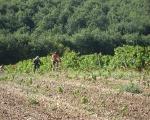chemins de vigne